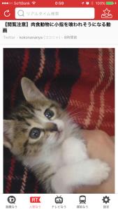 リアルタイムで人気ツイート確認 猫