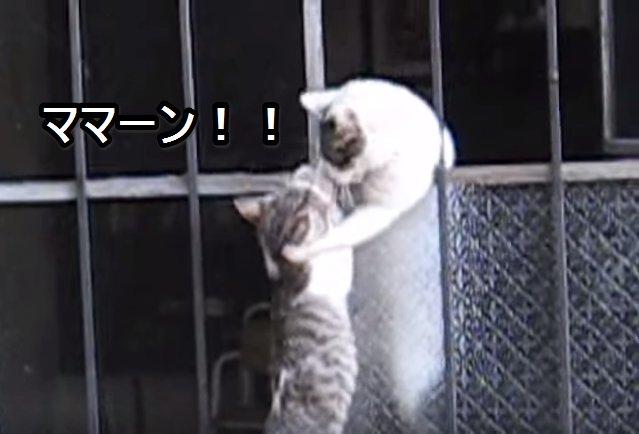 母猫の母性本能 子猫救出