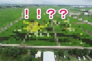 アイキャッチ_【画像あり】埼玉県行田市のドラクエの田んぼアートが想像を超えるクオリティで美しい