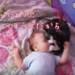 アイキャッチ_【動画あり】ギャン泣きする赤ちゃんに寄り添う猫。まるで「大丈夫だよ~」と言っているよう