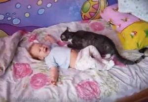 近寄る猫_【動画あり】ギャン泣きする赤ちゃんに寄り添う猫。まるで「大丈夫だよ~」と言っているよう