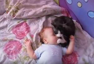 あやす猫_【動画あり】ギャン泣きする赤ちゃんに寄り添う猫。まるで「大丈夫だよ~」と言っているよう
