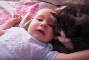 落ち着いた赤ちゃん_【動画あり】ギャン泣きする赤ちゃんに寄り添う猫。まるで「大丈夫だよ~」と言っているよう