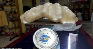 【画像あり】フィリピンで世界最大の天然真珠が発見され100億円を超える価値とされる