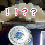 アイキャッチ_【画像あり】フィリピンで世界最大の天然真珠が発見され100億円を超える価値とされる