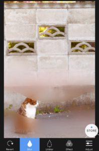 ぼかし戻し_【iPhone用】画像にぼかし加工を行う無料のおすすめアプリ4選